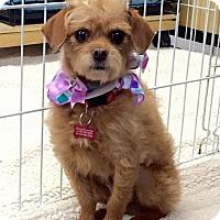 Adopt A Pet :: Samantha - Encino, CA