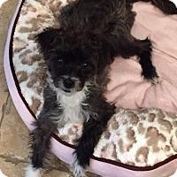 Adopt A Pet :: Trudy - San Diego, CA