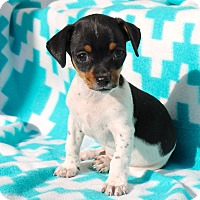 Adopt A Pet :: Jalepeno - 2 pounds - Los Angeles, CA