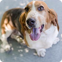 Adopt A Pet :: Harley - Salt Lake City, UT