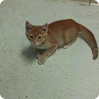 Adopt A Pet :: Flame - Maquoketa, IA