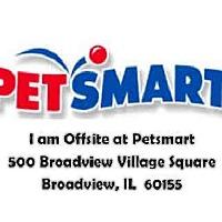 Adopt A Pet :: SAMMY - Chicago Ridge, IL