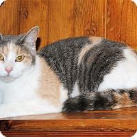 Adopt A Pet :: Fiona - Parsons, KS