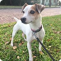 Adopt A Pet :: CAPONE - Terra Ceia, FL