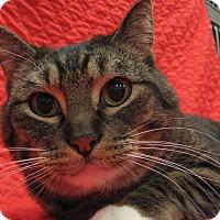 Adopt A Pet :: Rosco - Redwood Falls, MN