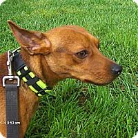 Adopt A Pet :: Wally - Orange Park, FL