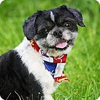 Adopt A Pet :: Romeo - Albany, NY