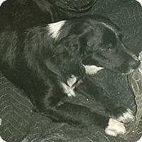 Adopt A Pet :: Marvin - San Ysidro, CA