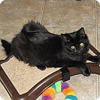 Adopt A Pet :: Batty Koda - Grand Rapids, MI