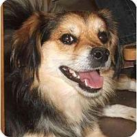 Adopt A Pet :: Homer - Davis, CA