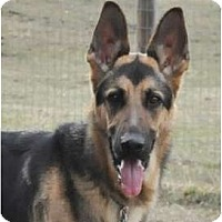 Adopt A Pet :: Shade - Hamilton, MT