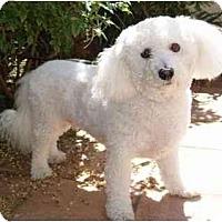 Adopt A Pet :: Webber - La Costa, CA