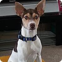 Adopt A Pet :: Honey - Elkhart, IN