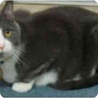 Adopt A Pet :: Sebasitan - Jenkintown, PA