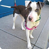 Adopt A Pet :: Queenie - San Francisco, CA