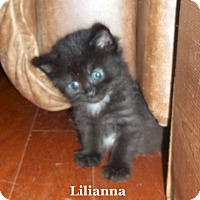 Adopt A Pet :: Lilianna - Bentonville, AR