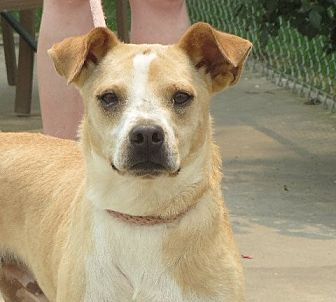 Terrier (Unknown Type, Small) Mix Dog for adoption in Rochester, New York - Dexter