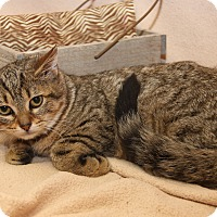 Adopt A Pet :: Dawn (Combo Tested & Spayed) - Marietta, OH