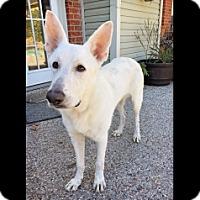Adopt A Pet :: Ice - Houston, TX