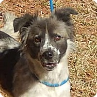 Adopt A Pet :: Mia - Locust Fork, AL