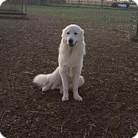 Adopt A Pet :: Jed LGD - Kyle, TX