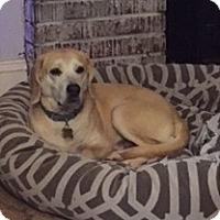 Adopt A Pet :: Copper - Richmond, VA