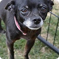 Adopt A Pet :: Bambi - Meridian, ID