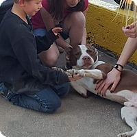 Adopt A Pet :: Buck - White Settlement, TX