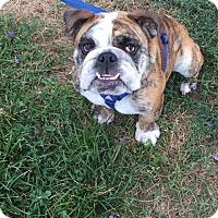 Adopt A Pet :: Jelly Bean - Santa Ana, CA