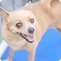Adopt A Pet :: Cricket - Canoga Park, CA