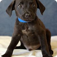 Adopt A Pet :: Grayson - Waldorf, MD
