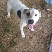 Adopt A Pet :: Chance - Redfield, AR