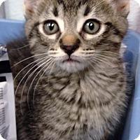 Adopt A Pet :: Puck - Newberg, OR