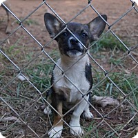 Adopt A Pet :: Princess - Martinez, GA
