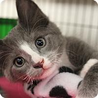 Adopt A Pet :: Jerome - Sarasota, FL