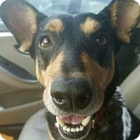 Adopt A Pet :: Pancho - Palm Harbor, FL