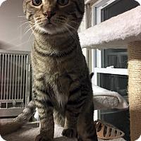 Adopt A Pet :: Dino - Loogootee, IN