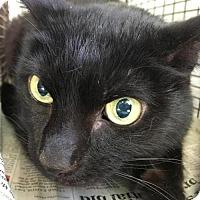 Adopt A Pet :: LOKI - San Antonio, TX