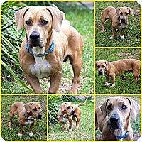 Adopt A Pet :: Frankie - Davenport, FL