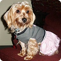 Adopt A Pet :: Kayla - Mooy, AL