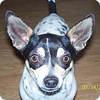Adopt A Pet :: Mandy - Andrews, TX