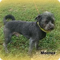 Adopt A Pet :: MONTEZ - Henderson, KY