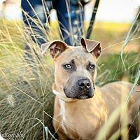 Adopt A Pet :: Casey - Reisterstown, MD