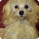 Adopt A Pet :: Louis