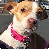 Adopt A Pet :: CHLOE - Hurricane, UT