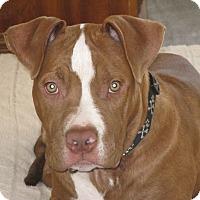 Adopt A Pet :: Dragon - Sinking Spring, PA