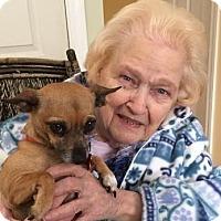 Adopt A Pet :: Chi Chi - Plain City, OH