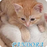 Adopt A Pet :: Pandora - Hamilton, ON
