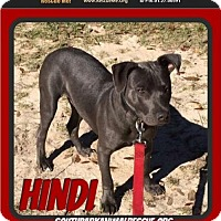Adopt A Pet :: Hindi - Pensacola, FL