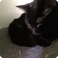 Adopt A Pet :: Esmeralda - Ann Arbor, MI